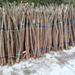 ヒノキの枝を自然乾燥中|大山椅子